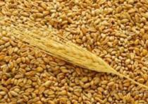 Более 453 тысяч тонн зерна и крупы из Оренбуржья не могло попасть на российские прилавки в 2017 году