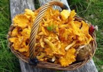 Из-за аномальной теплой российской зимы в лесах пошли грибы