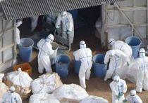 Военные помогают ликвидировать птичий грипп на фабрике под Костромой