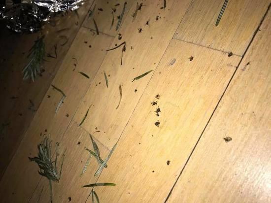 Новогодние сюрпризы: елки принесли в квартиры москвичей клопов и пауков