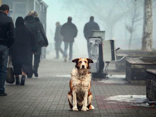 В Оренбурге на отлов бродячих животных выделяется 10 миллионов рублей