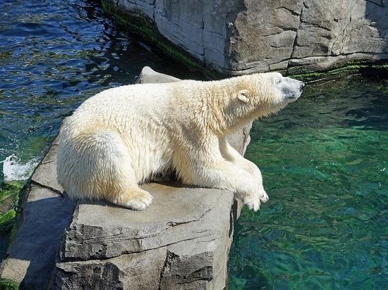 Впервые собственное селфи сделал белый медведь