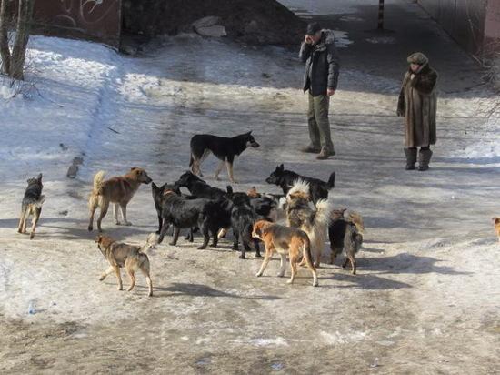 Проблемы бездомных животных - люди, живущие поблизости