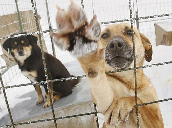 К ЧМ-2018 по футболу объявлены тендеры на убийство собак