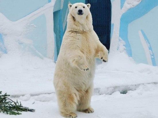 Северные хищники благоденствуют в новосибирские холода