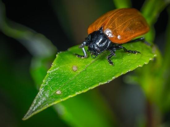 Глобальное потепление странным образом повлияло на жуков