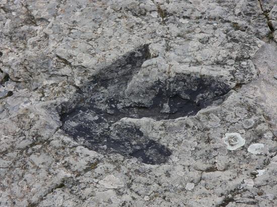 На территории лаборатории NASA найдены следы динозавров