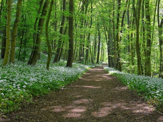 Для защиты лесов края увеличат штат инспекторов