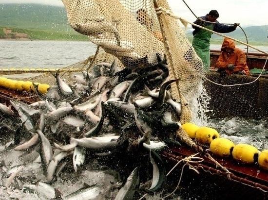 Специалисты вновь прогнозируют большие уловы