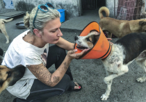 Как русские спасают собак, обреченных в Китае на съедение