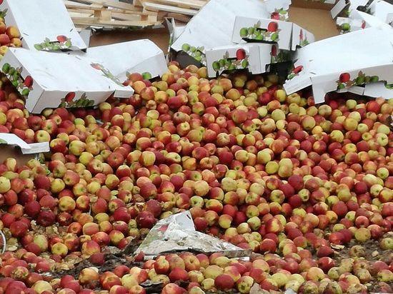Россия запретила поставки яблок с 31 белорусского предприятия
