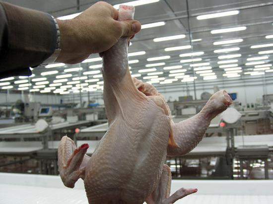 В Китае выявили факт заражения человека новым штаммом птичьего гриппа