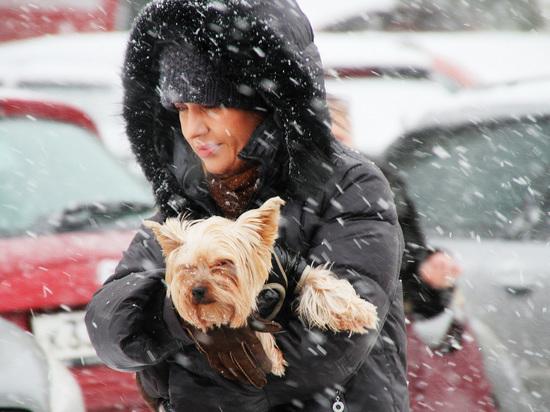 К 23 февраля в Москве похолодает до -20