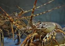 Живых омаров в Швейцарии отныне запрещено кидать в кипяток — об этом говорится в официальном акте, вступившем в силу 1 марта