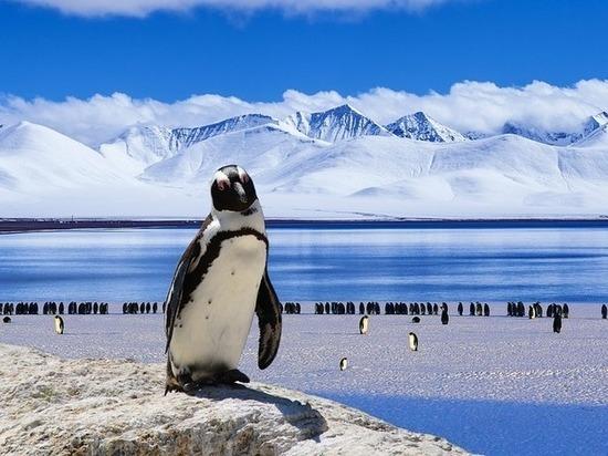 В Антарктиде нашли полуторамиллионную колонию пингвинов