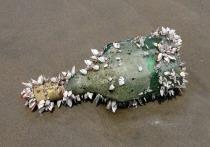 Древнейшее в мире послание в бутылке обнаружено на австралийском пляже