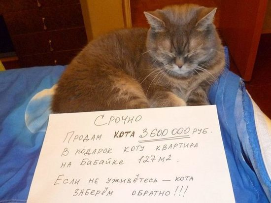 В Астрахани продают кота за 3,5 миллиона и дарят квартиру