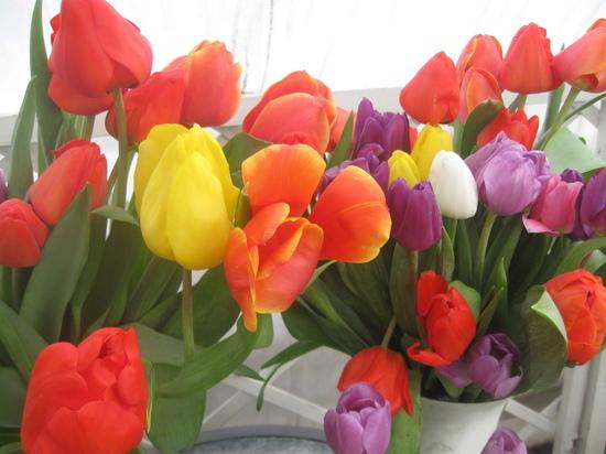 Читинские тюльпаны для прекрасных дам