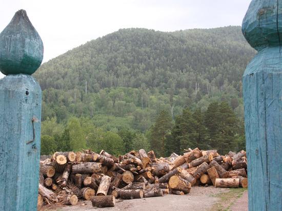 Башкирия может стать пилотным регионом по внедрению цифровых технологий лесоустройства