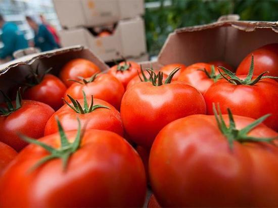 В Тамбове под пресс попало 310 килограммов турецких томатов