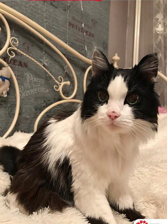 В Бурятии живет самая старая кошка России по кличке Катя