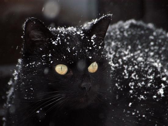 Куряне спасли кошку из ледяного плена