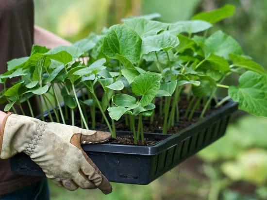 Станция юннатов научит костромичей выращивать рассаду