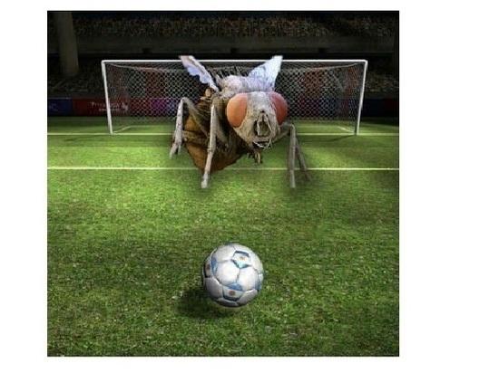 Лайфхак: Как провести Чемпионат мира и не уничтожить экосистему