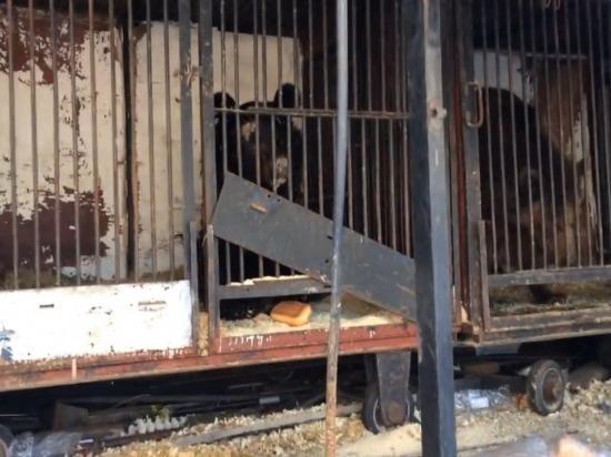 В Самаре брошенных медведей возьмет под опеку местный зоопарк