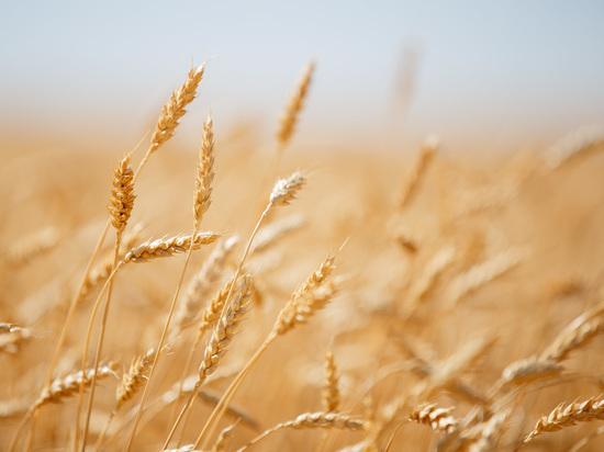Волгоградская область представит свой потенциал в АПК на всероссийском сельхозфоруме