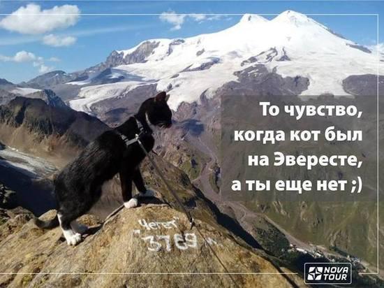 Кот Граф совершил восхождение на Эльбрус