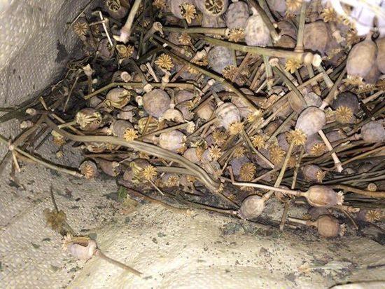 Житель Усть-Удинского района пытался продать большой мешок маковой соломки