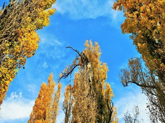 В Москве создадут систему мониторинга здоровья деревьев