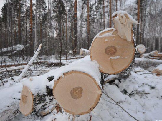 Кваркенский лесоруб незаконно вырубил 56 деревьев