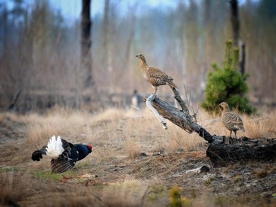 Костромичам предложили проголосовать за сроки весенней охоты