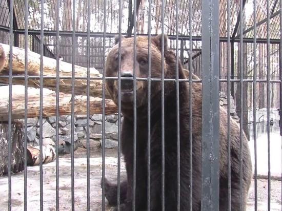 В новосибирском зоопарке вышли из спячки медведи и барсуки