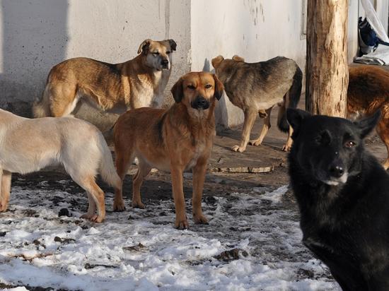 Стало известно, кто выпустил собак-людоедов в Истре