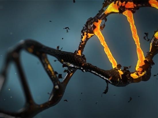 В Марокко обнаружены древнейшие в Африке следы ДНК Homo Sapiens