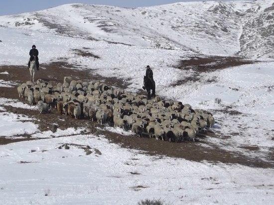 Глава Тувы похвалил трудолюбивого сироту, занявшегося овцеводством