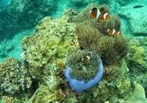 Морские губки раскрыли дальневосточным ученым новые секреты борьбы с раком
