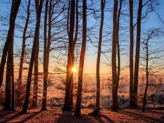 Зелёные лёгкие Сургута сохранят в статусе городских лесов