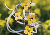 Искусственный цветок с нектаром и пыльцой создали для привлечения пчел австралийские инженеры
