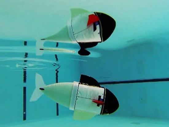 Инженеры создали рыбу-робота, не пугающую морских обитателей