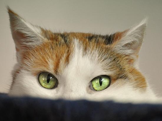Конкуренты насиловали друг друга, прикрывшись котом: странная история мести