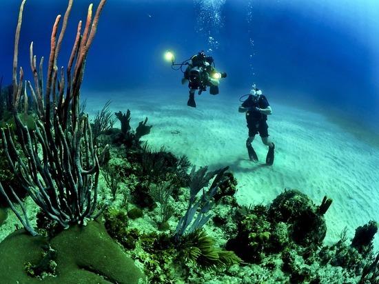 Биологи запечатлели секс таинственных глубоководных обитателей