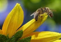 Пчелы заживут по-новому: подмосковные депутаты подготовили порцию «медовых» поправок