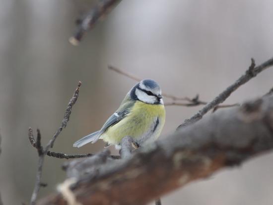 Специалисты посоветовали москвичам не покупать птиц на Благовещение