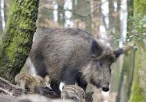 КС РФ избавил владельцев охотничьих угодьев от оплаты вакцинации животных