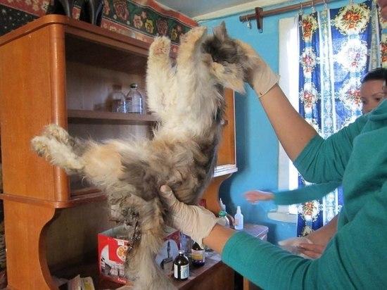 В Астрахани лжеволонтер ворует деньги, предназначенные для лечения животных
