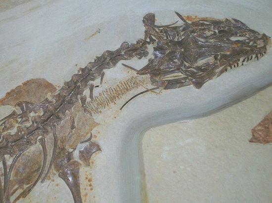 У современных ящериц встречается лишь один теменной глаз